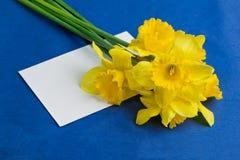 桶水仙花和信封在蓝色背景 免版税图库摄影
