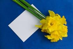 桶水仙花和在蓝色背景的一个信封 免版税图库摄影