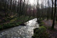 从梅尔旺的森林的Verreries的溪 库存图片