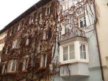 梅拉诺,特伦托自治省,意大利 用一棵上升的植物盖的门面 免版税库存图片