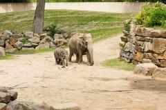 梅赫伦,比利时- 2016年5月17日:大象在Planckendael动物园里 库存照片