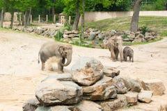 梅赫伦,比利时- 2016年5月17日:大象在Planckendael动物园里 免版税库存照片