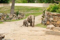 梅赫伦,比利时- 2016年5月17日:大象在Planckendael动物园里 库存图片