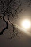 梦想…树和神秘的星期日的时期。 免版税库存照片