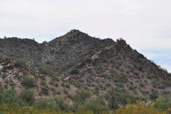 梦想的凹道绿色沙漠 库存照片