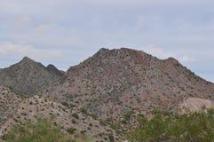 梦想的凹道绿色沙漠 免版税库存照片