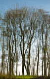 梦想的反映结构树 免版税图库摄影