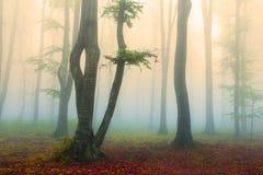 梦想的地点在秋天期间的有薄雾的森林里 免版税库存照片
