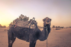 梦想的撒哈拉大沙漠 库存图片
