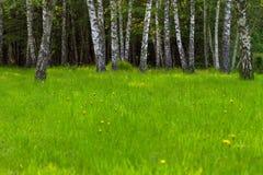 梦想的森林 库存照片