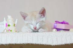 梦想的概念 一小小猫睡觉 图库摄影