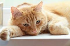 梦想的猫 免版税库存照片