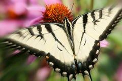 梦想的蝴蝶 库存照片