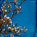 梦想的springflowers背景 免版税库存照片