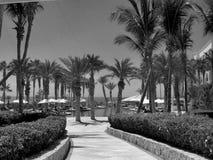 梦想Los Cabos随员高尔夫球手段和温泉在墨西哥 库存图片