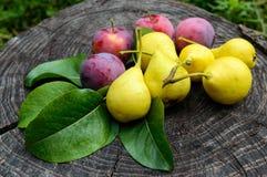 梨新近地采摘了在一个木树桩的黄色和桃红色李子 免版税库存图片