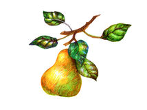 梨照片与在白色隔绝的叶子的 免版税库存照片