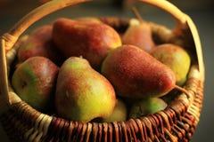 梨篮子-立陶宛的老种类 库存照片
