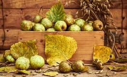 梨,下落的叶子,在木土气破旧的背景的燕麦五谷 图库摄影