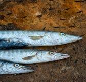 梭子鱼鱼背景 库存图片