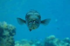 梭子鱼 库存图片