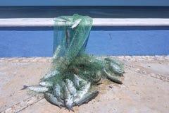 梭鱼新鲜的抓住  图库摄影