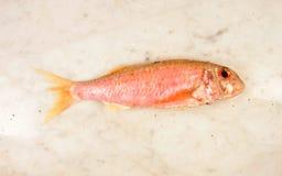 梭鱼红色 免版税库存图片