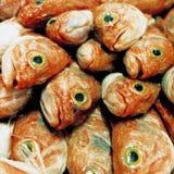 梭鱼 免版税库存照片