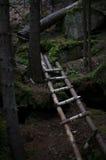 梯子在黑暗的森林里 免版税图库摄影