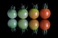 梯度在反射黑色的西红柿 免版税库存照片