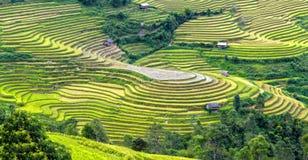 梯田西北越南秀丽  免版税库存图片