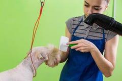 梳在狗` s面孔的发刷 免版税库存照片