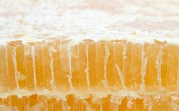 梳子剪切蜂蜜 图库摄影