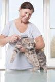 梳猫品种苏格兰人折叠的年长妇女 免版税图库摄影