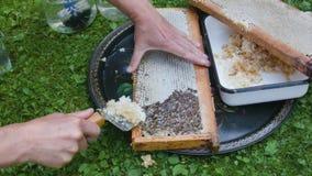 梳蜂房框架 影视素材