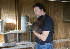 检查一只自由放养的鸡的脚的农夫 免版税图库摄影