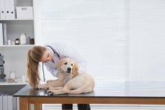 检查一条小狗的狩医 免版税图库摄影