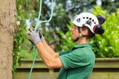 检查上升的绳索的荷兰树木栽培家在树 库存照片