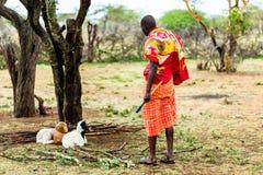 检查他的山羊的马萨伊农夫 免版税图库摄影