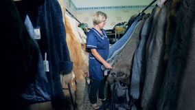 检查在一个挂衣架的妇女动物毛皮在屋子里,关闭  股票录像