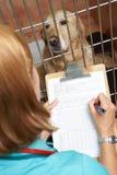 检查在笼子的狗的兽医护士 免版税库存照片