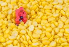 检查在豆种子的科学家化学制品 库存照片