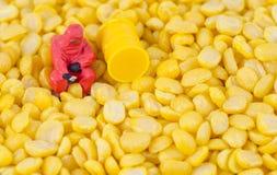 检查在豆种子的科学家化学制品 库存图片
