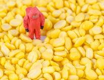检查在豆种子的科学家化学制品 免版税库存图片