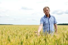 检查大豆领域的农夫 独特的技术生长 库存图片