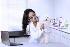 检查女性兽医的狗 图库摄影
