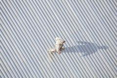 检查屋顶的人在修理以后 免版税库存照片