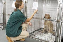 检查护士的动物写作病vetinary 免版税库存图片