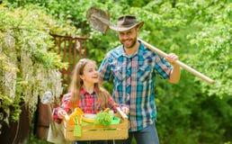 检查每日您的庭院及早察觉昆虫麻烦 家庭爸爸和种植植物的女儿女孩 在农场的天 免版税图库摄影