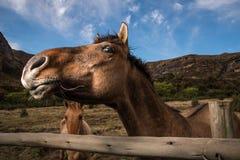检查照相机的马 免版税图库摄影